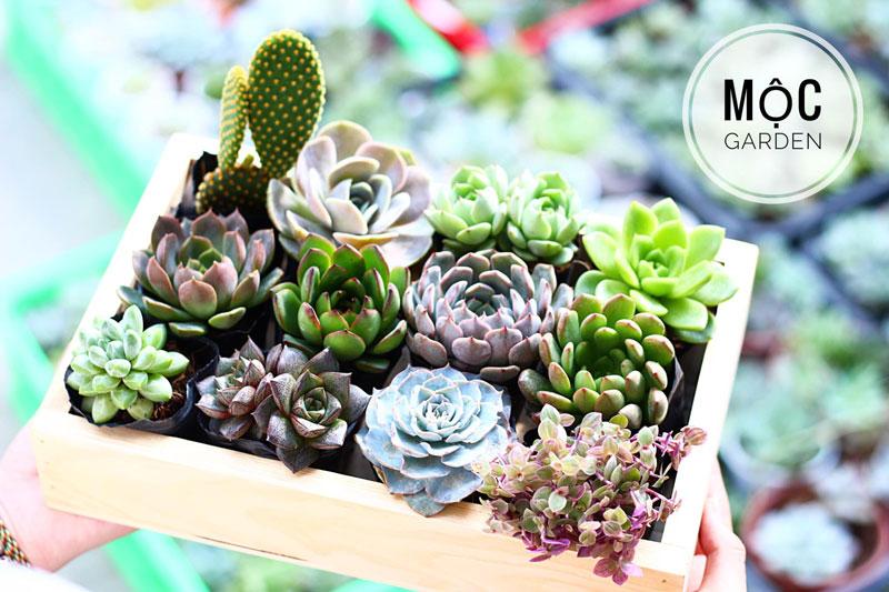 Top 10 địa chỉ bán sen đá tại tp Hồ Chí Minh đẹp, uy tín | Blog cây cảnh  klpt